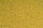 ORLUX PATEE GOLD CANARIS 250 G
